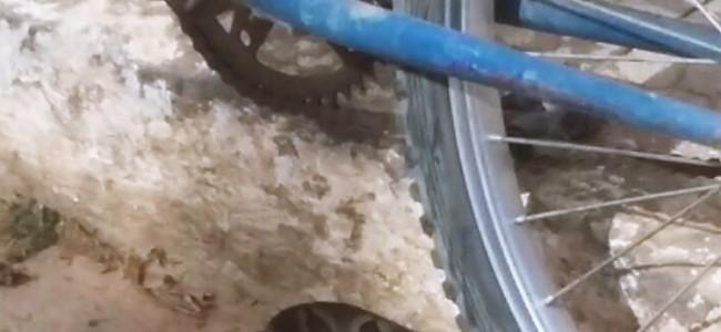 Cobra enrolada ao lado do meio fio.